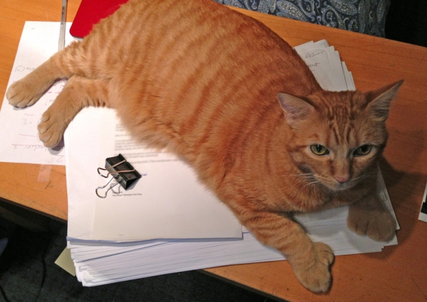 Fred the cat on top of manuscript